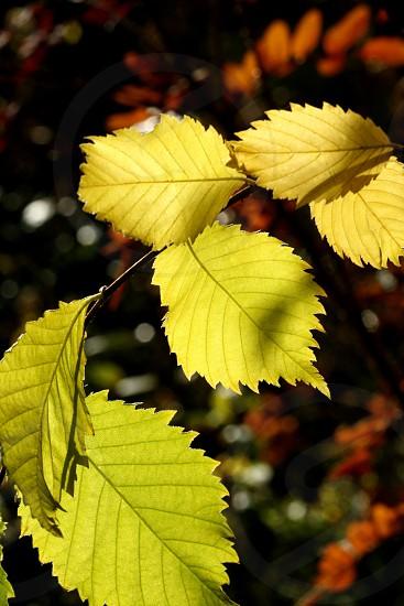 autumn colors garden sunlight photo