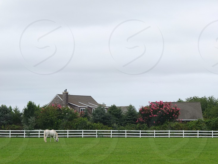 white horse in green grass field photo