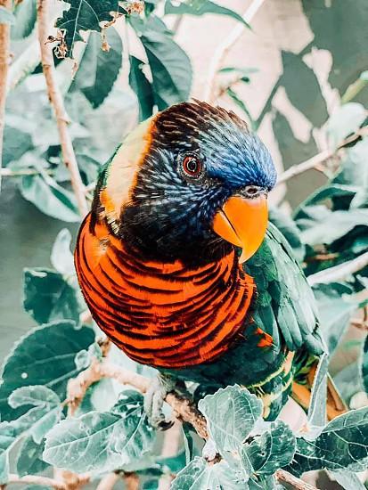 Friendly parrot #birds #nature #wildlife #outdoors photo