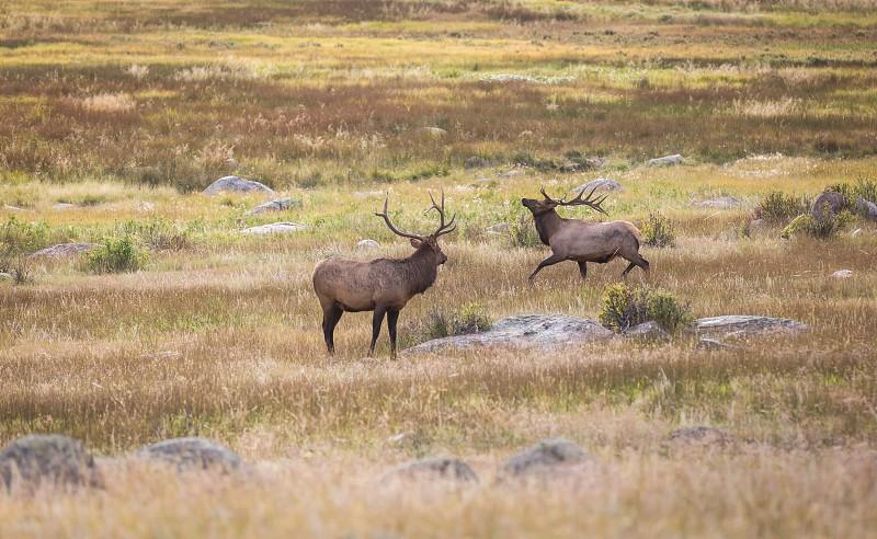 Wildlife in the Rocky Mountain National Park near Estes Park photo