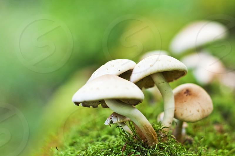 little mushrooms photo