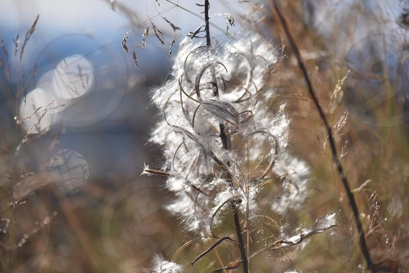 natur på Norefjell photo