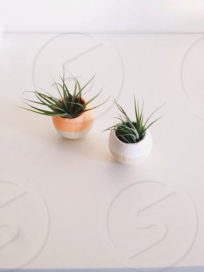 small white and tan pots with plants photo