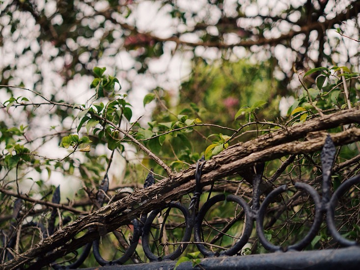 selective focus photography of trees and railings photo