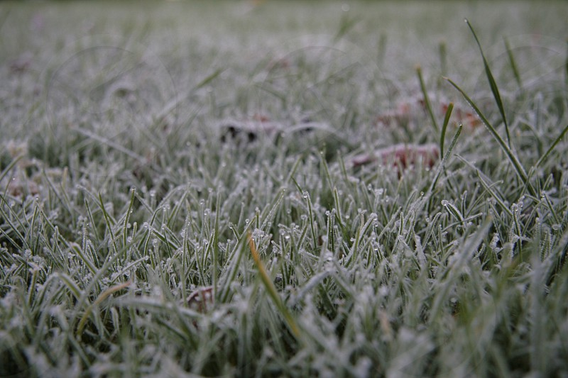 Frost grass winter frozen photo