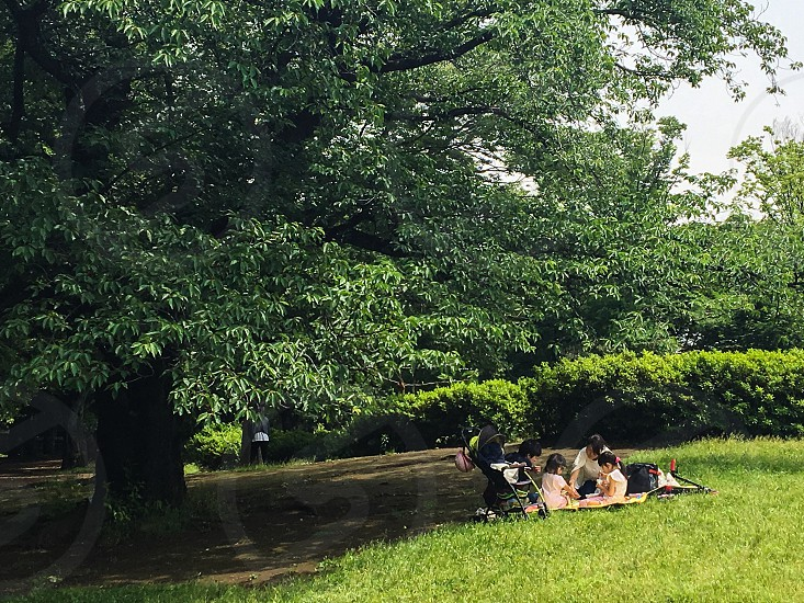 Park Picnic Family Warm Relax Green Nature Grass Mother and children Trees Big tree Nature photo