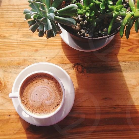 cappuccino on a wood table with succulent plant photo