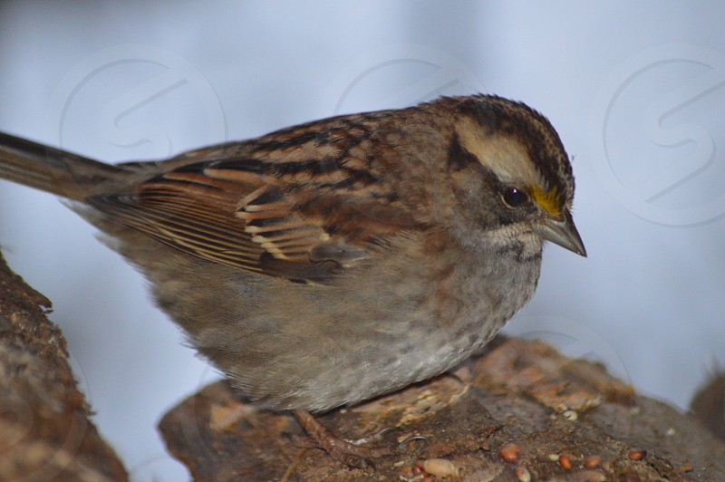 brown sparrow perched on tree in close up photography during daytime photo