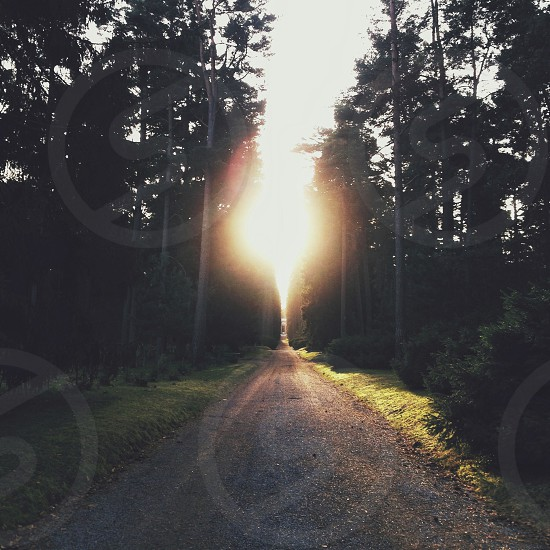 sun rays between forest photo