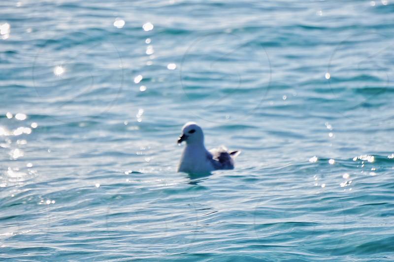 Birdoceanwaterseabirdwatching  photo