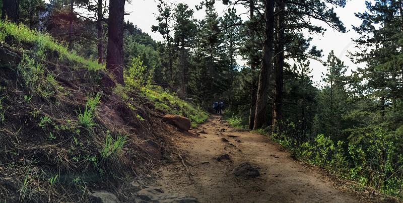 pathway between green trees photo