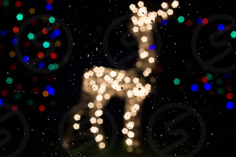 Christmas Reindeer Bokeh photo
