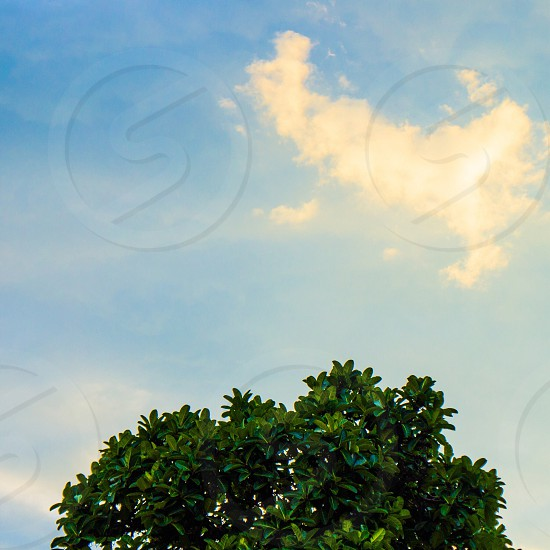 green leafed plant and white cloudy sky photo