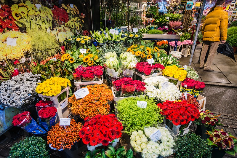 The colours of Amsterdam Singel Canal Flower Markets Amsterdam Netherlands. photo
