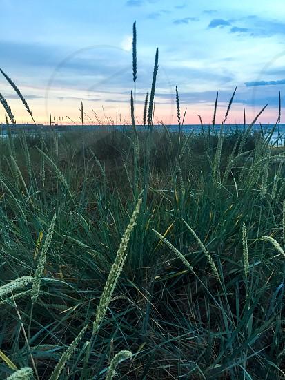 Baltic Sea Beach sunset beautiful Place to be photo