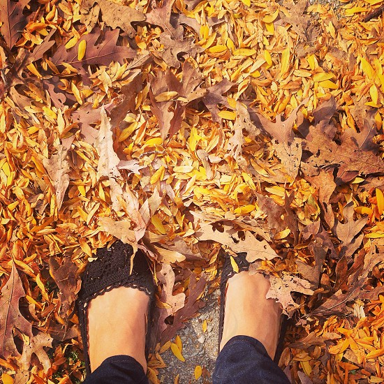Fall leaves Midwest black flats yellow autumn photo