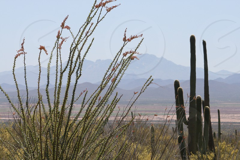 tall plant stalks near green cactus on field under blue sky during daytime photo