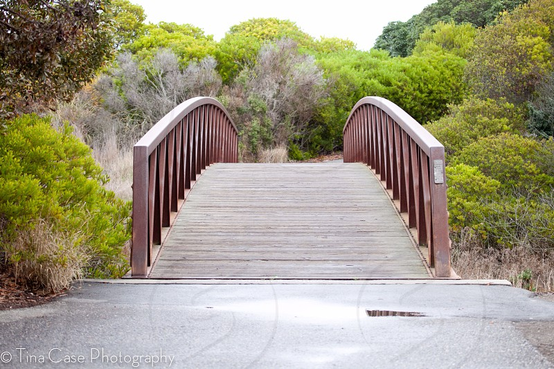 brown wooden bridge with trees photo  photo