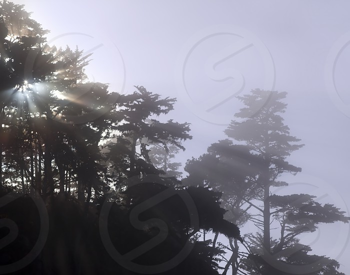 Sun coming through trees and mist at Point Lobos CA photo