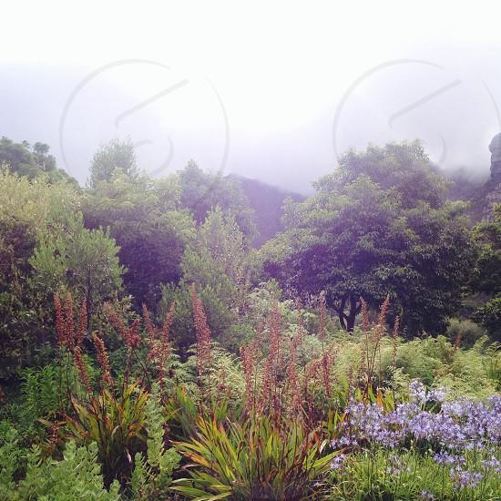 Botanical Garden in California :) photo
