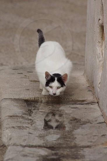 Dubrovnik cat photo