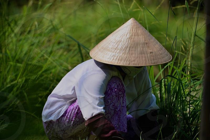 Vietnamese worker in the field. photo