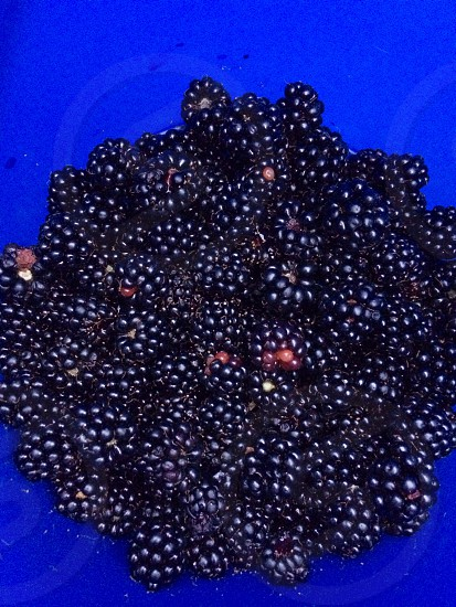 Wild Blackberries in a blue bucket photo
