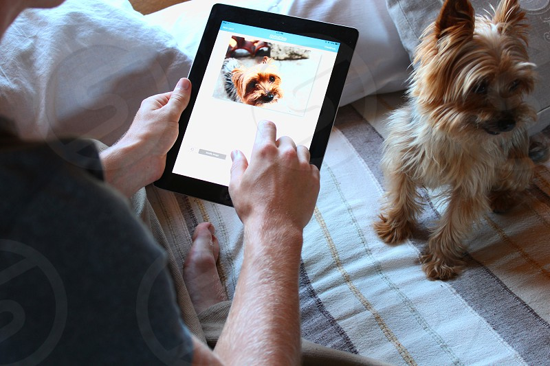 person using a black smart tablet to take a picture of a norwich terrier photo