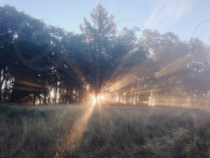 view of sunrise behind trees photo