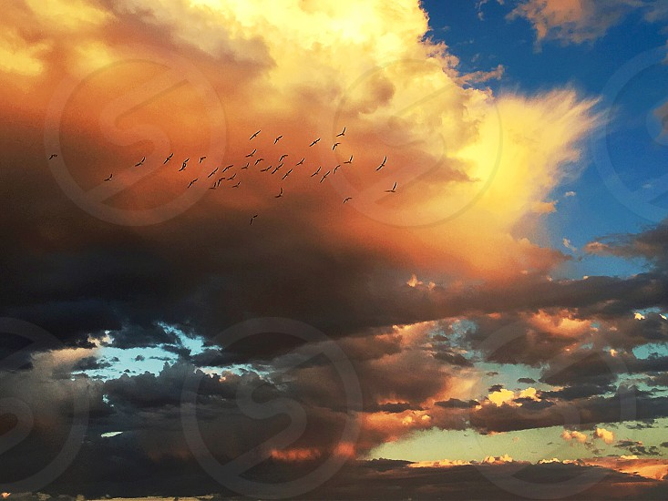 Flock birds seagulls silhouette sky sunset storm clouds flight light orange dramatic sky ominous beautiful fiery hope promise motion rolling large thunder background copy space text space gulls group of animals weather pattern destiny inspire motivation blue unusual rare phenomenon  photo