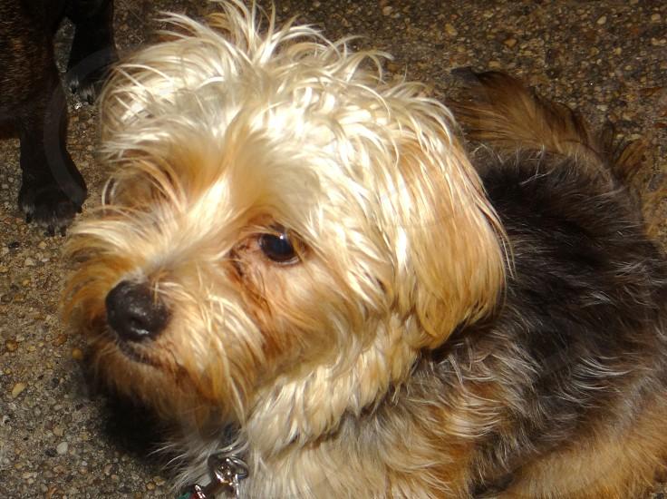 dog mix puppy mutt photo