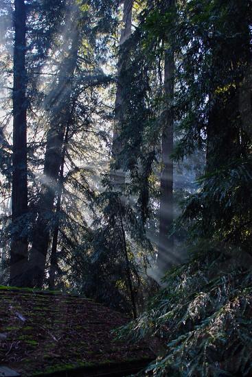 Light through the trees photo