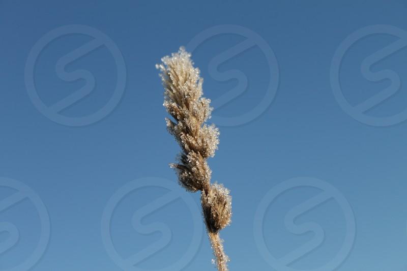 plant photography photo