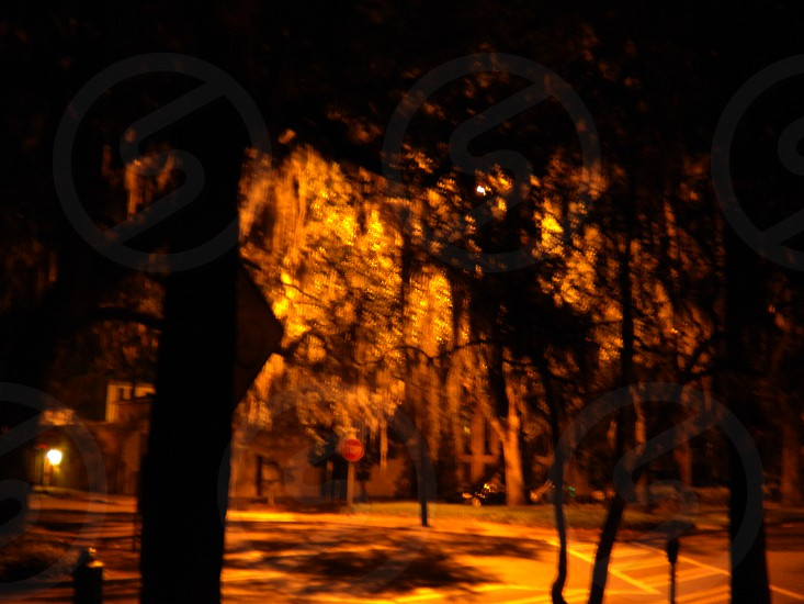 Savannah GA by night photo