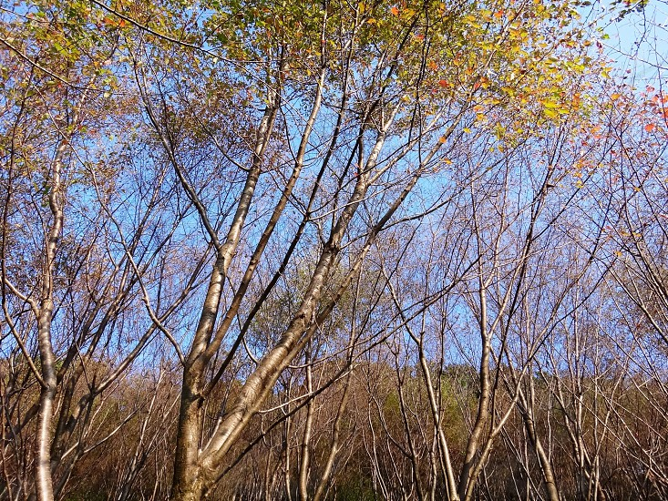 Autumn trees photo