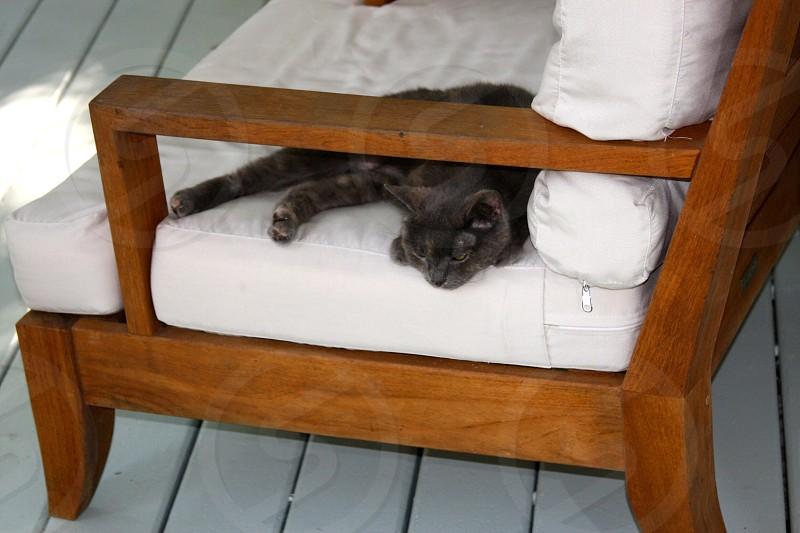 #cat photo