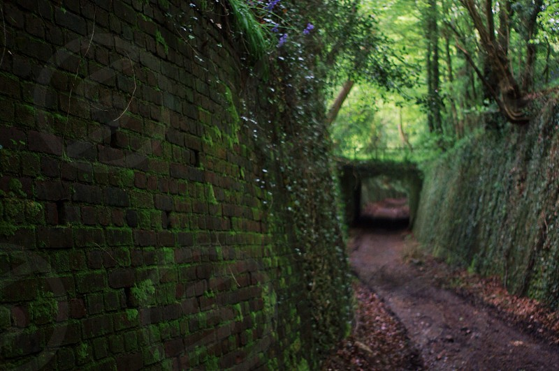 Pathway path vines windy tunnel bridge leaves green foliage countryside empty moss overgrown walls wall photo
