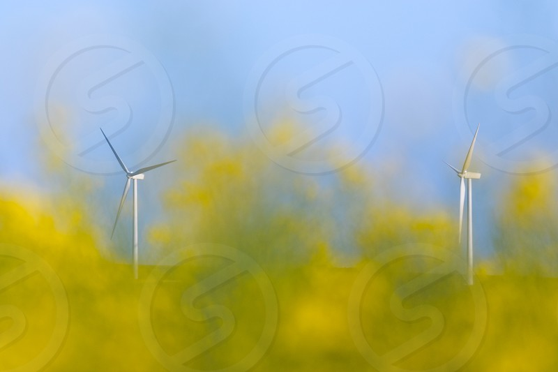 Two wind turbines seen through a field a rapeseed in bloom (out of focus in the foreground) to feature two sources of renewable energy.  NB : no model release needed as i removed the logo on the wind turbines and they aren't any people or properties in this photo. photo