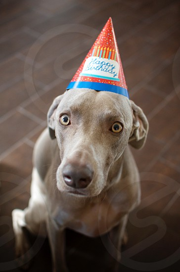 Happy Birthday from this pet photo