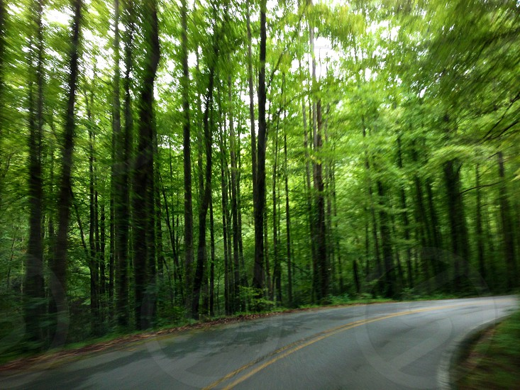 asphalt road surrounded of green forest photo