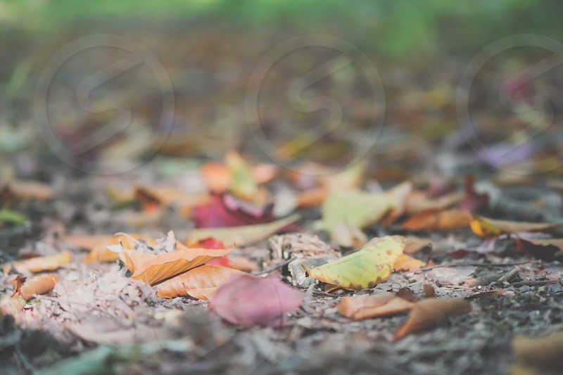 orange and dried leaves on ground photo