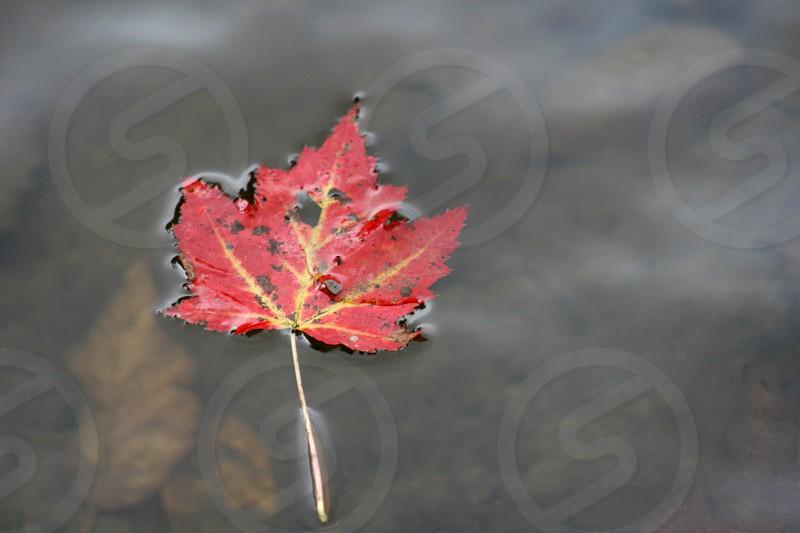 Crisp autumn leaf  photo