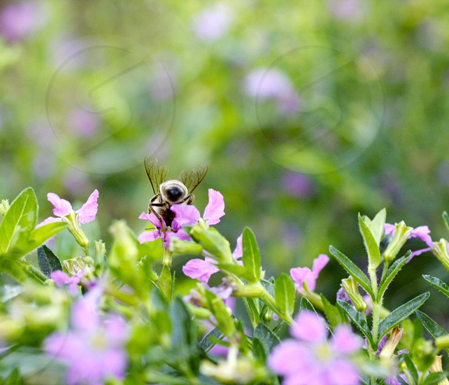 Macro bee plants flowers purple green yellow close-up nature animals insects.  photo