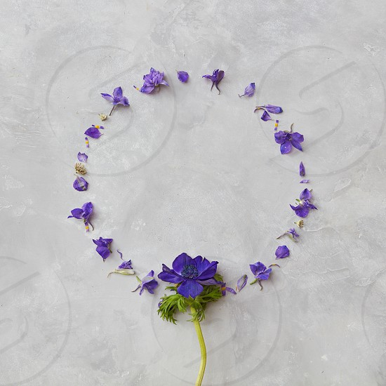 Composition of flowers organized in circle over grey background. Beautiful composition may be used for post card copy space for expressing positive emotions. photo