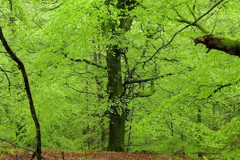 Scottish Green photo