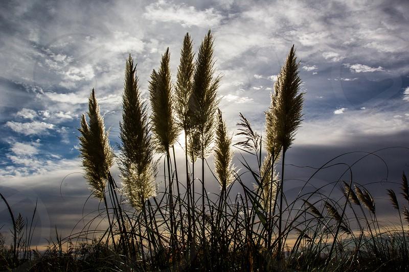 Grau-du-Roi Gard France photo