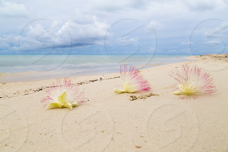 Flowers on exotic beach photo