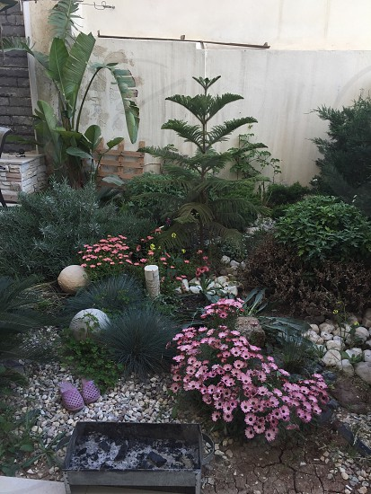 My apartment garden in Amman photo