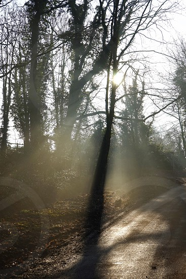 Light rays silhouetting tree by roadside photo