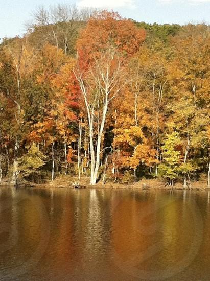 Nashville Tennessee Radnor Lake Fall Leaves trees photo